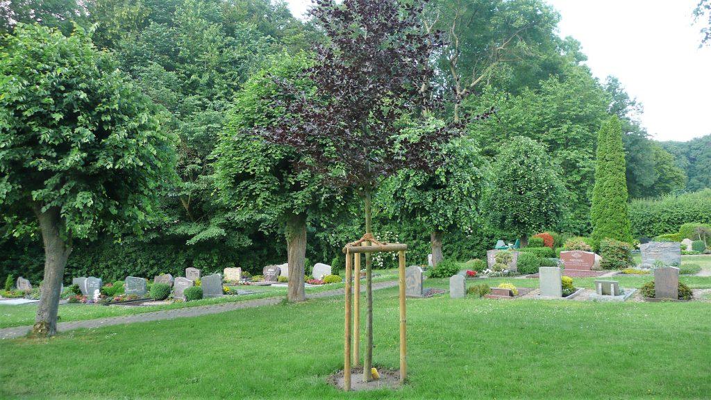 Friedhof Meierberg Urnenbaum
