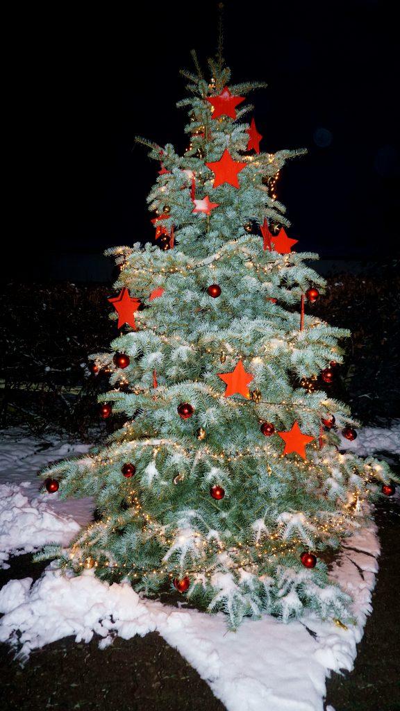 Weihnachtsbaum Meierberg